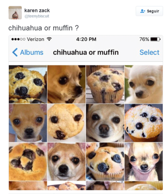 chihuahua-muffin