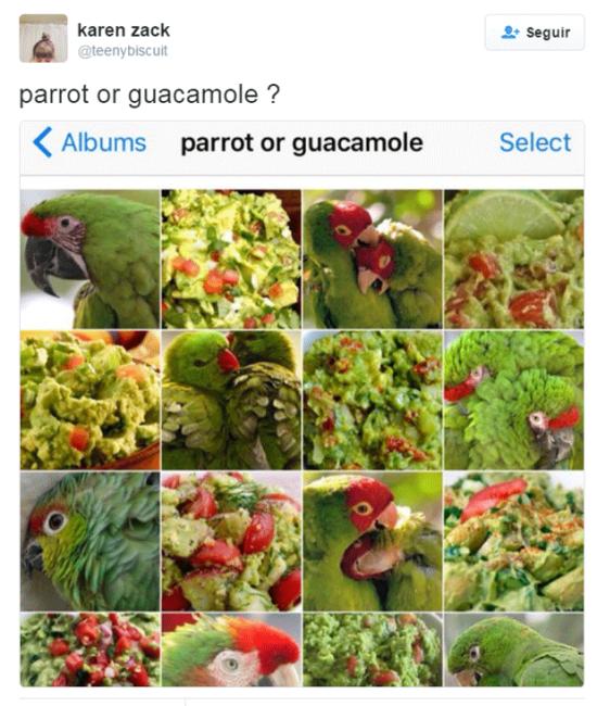 passaro-guacamole